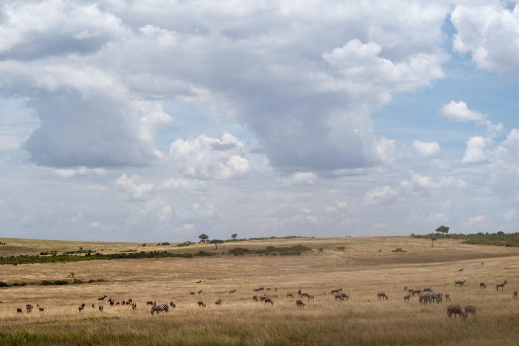 Green List retreat in Kenya: a bottom up brainstorming